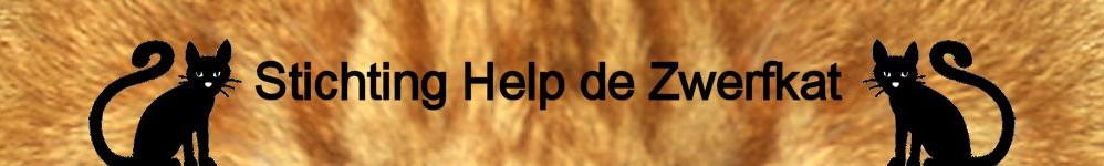 Help de zwerfkat